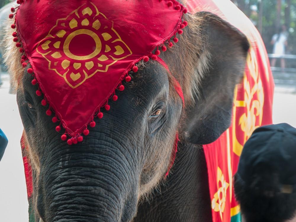 Mutmach-Geschichte Elefant